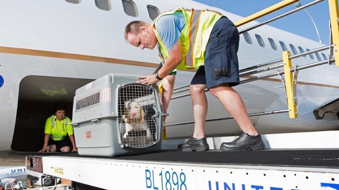 PetSafe Pet Transport & Shipping
