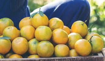 Perishables or produce